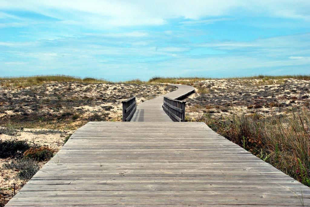 Future Business Path